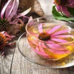 اکیناسه قویترین سلاح گیاهی برای مبارزه با سرماخوردگی