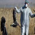 هر آنچه باید در خصوص آنفلوانزای پرندگان بدانید