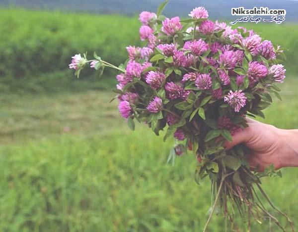 گیاهان مفید برای پاکسازی سیستم لنفاوی