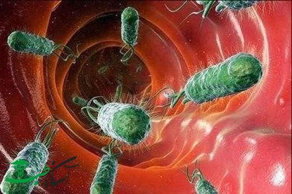 هلیوباکتری یا میکروب معده تا رسیدن به سرطان معده