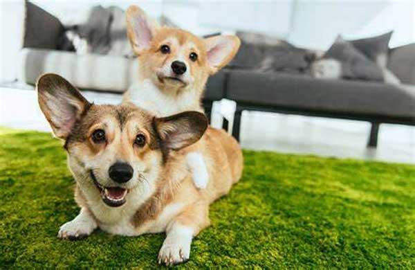 نگهداری حیوانات در خانه