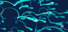 اسپرم چه مدت زنده است؟