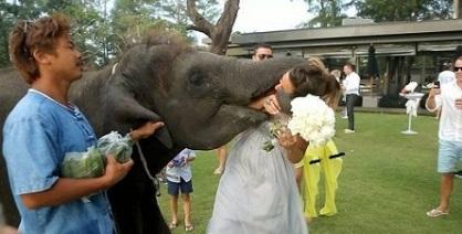 شوخی وحشتناک با عروس در روز عروسی/تصاویر