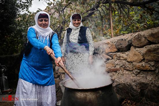 عکسهایی تماشایی از برداشت انار در روستای «انبوه»!+تصاویر