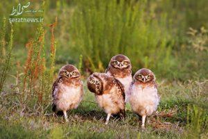عکسهایی منتخب و دیدنی از حیوانات در طبیعت!+تصاویر