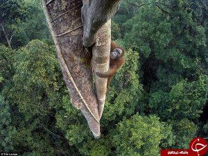 مناظر دیدنی و خیره کننده ای از حیوانات وحشی!+تصاویر