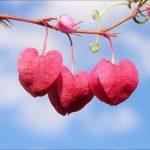 عشق واقعی چیست و چند درصد از آدمها واقعا عاشق هستند؟