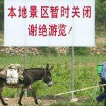 بحران تازه در چین؛ قیمت خر ۴ برابر شد