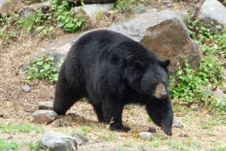 شجاعت دو زن در فراری دادن خرس آدمخوار+تصاویر