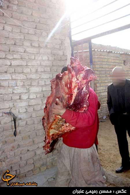 دستگیری فروشندگان گوشت الاغ + تصاویر