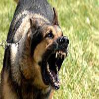 حمله وحشتناک و خونین سگهای ولگرد به پسر ۱۲ ساله را ببینید! + عکس