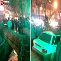 سقوط درخت بر روی پراید و مصدومیت شدید زن جوان +تصاویر