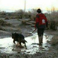 مفقودان حادثه دشت پلنگ و جستجو با استفاده از سگهای زندهیاب +عکس