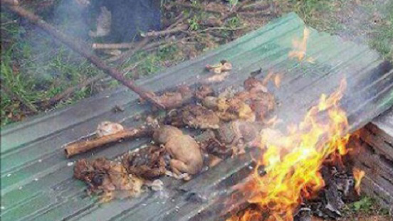 قتل عام مسلمانان در میانمار