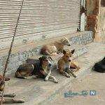 جزئیات حمله سگ های ولگرد در قشم به بچه ۳ ساله و مرگ تلخ او +عکس