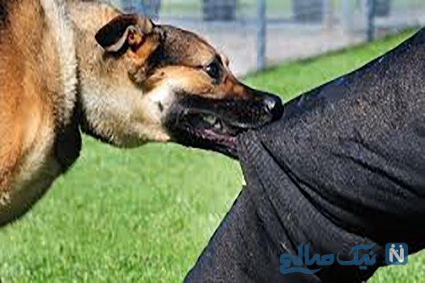 جزئیات حمله مرگبار سگ ها به کودک پنج ساله در بوئینزهرا +عکس