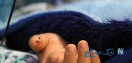 جزئیات دلخراش قتل کودک ۴ ساله امیرعلی در بستان آباد