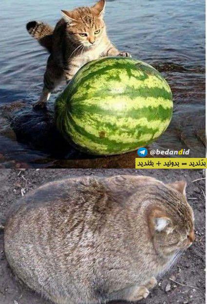 عکس های جالب از سوژه های خنده دار سری ۲۳۳