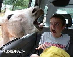 عکس های جالب از سوژه های خنده دار سری ۱۷۶