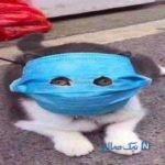 عکس های خنده دار از گربه ایران تا لباس کرونایی سری ۶۸۰