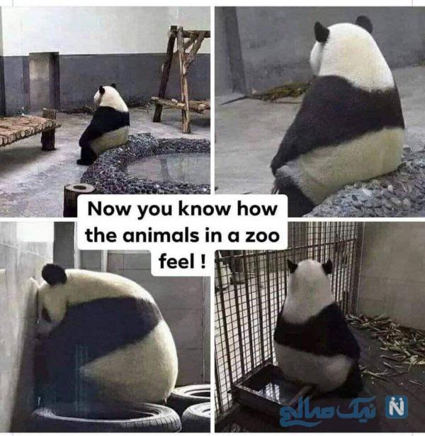 الان بیش از هر زمانی حیوانات توی قفس باغ وحش را باید درک کنیم!
