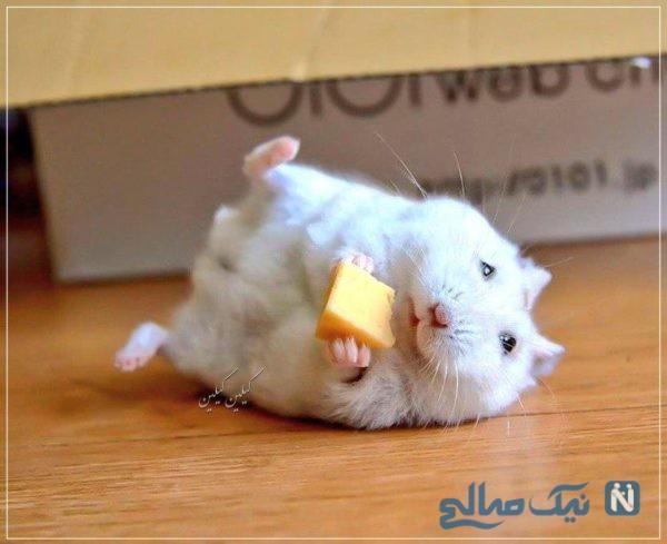 سبک زندگی موش