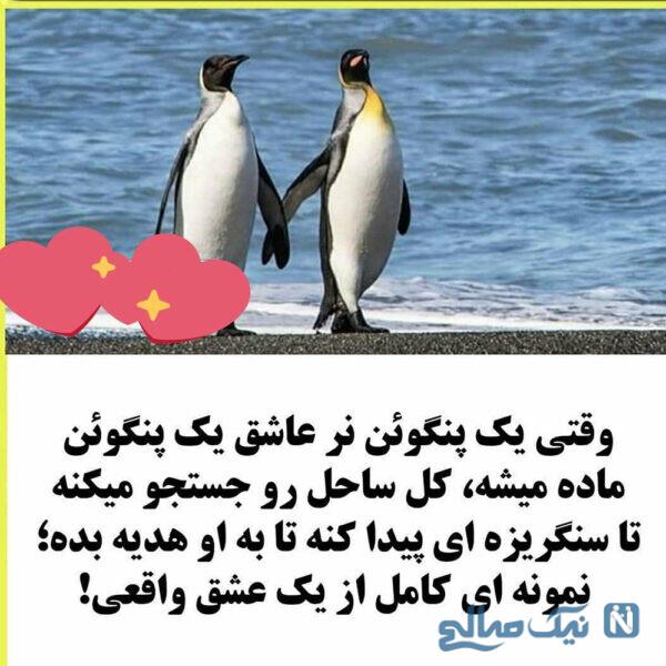 از پنگوئن یاد بگیرید