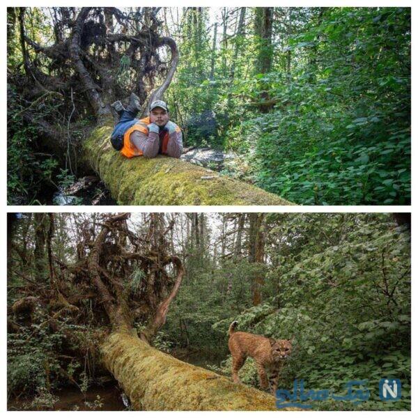 فیگور در جنگل