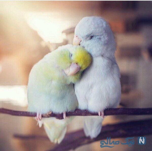 براتون یه همچین عشقی و آرزو می کنم