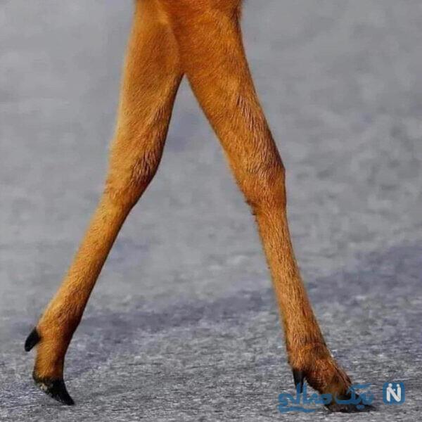 پاهای آهو