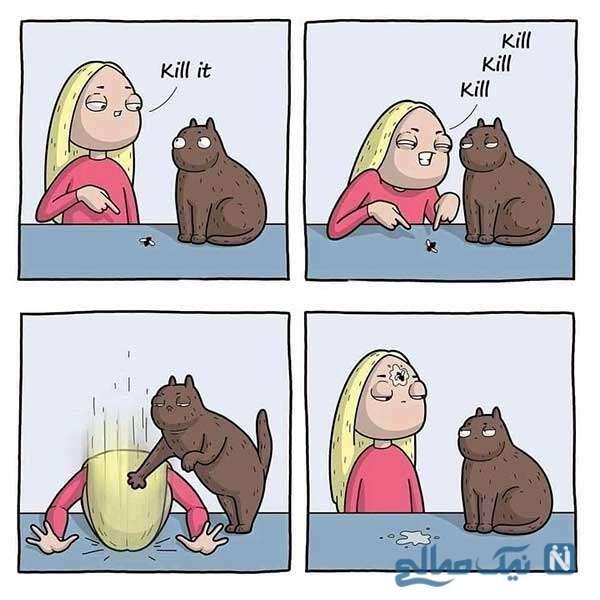 به گربه دستور ندید