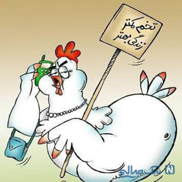 ژست مرغ ها بعد از گرونی تخم مرغ