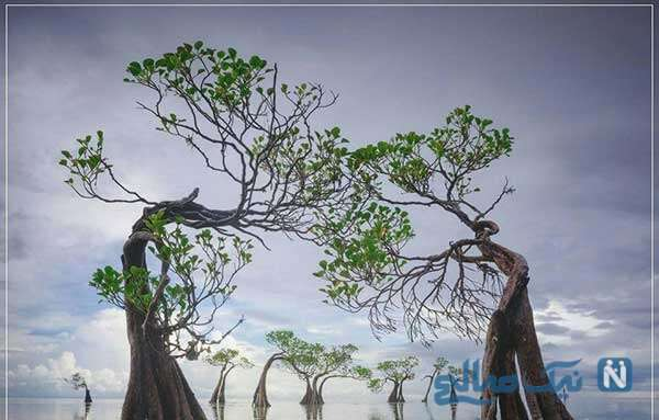 رقص درختان