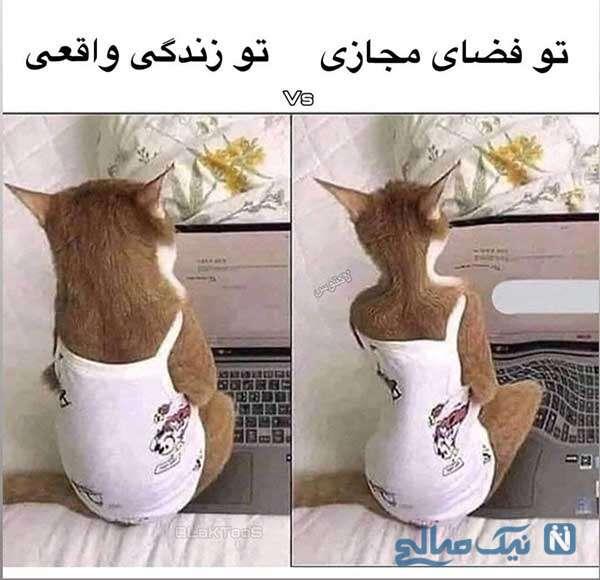 تفاوت
