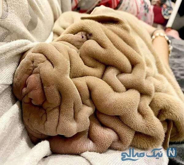سیرابی نیست سگه
