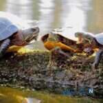 عکس های خنده دار از تیپیکال پدرها در ماه رمضان تا غیبت کردن لاکپشت ها