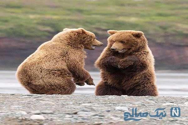 عکس های خنده دار ازپیشگویی درباره عباس بوعذار تا علت ناخن کاشتن