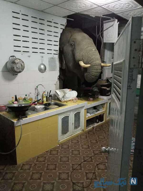 وقتی در تایلند فیل ترمز می بره