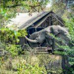 راهنمای سفر به آفریقای جنوبی سفری اکتشافی و سیاحتی با هزینه کم