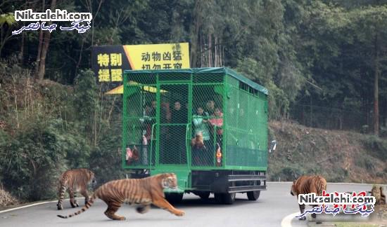 ایده بسیار خارق العاده یک باغ وحش برای بازدیدکننده ها! +عکس