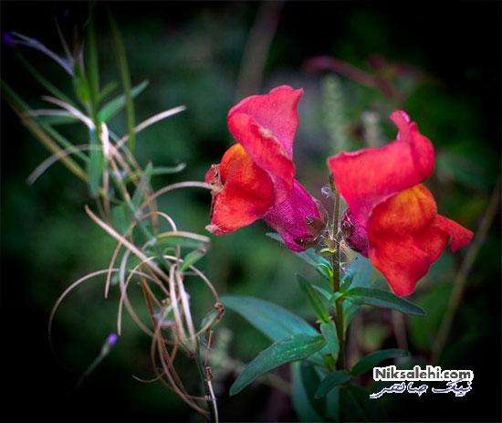 گل زیبا و رنگارنگ