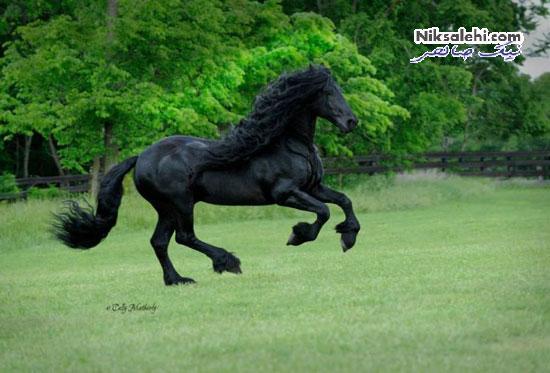 زیباترین اسب دنیا