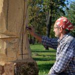 اثرهای هنری خارق العاده روی کنده های قدیمی درخت