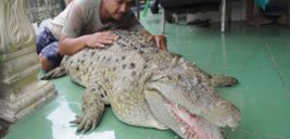 ۲۰ سال زندگی مسالمت آمیز یک خانواده اندونزیایی با یک تمساح بزرگ