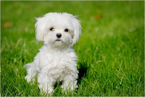 سوژه شدن سگی با چهره ای شبیه انسان در شبکه های اجتماعی!