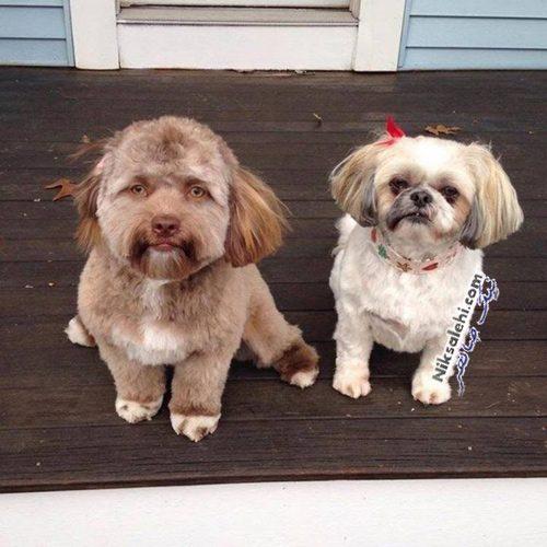 سگی با چهره شبیه انسان