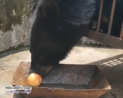 تبدیل شدن توله سگ به خرس
