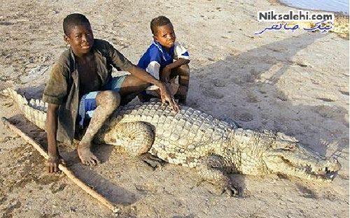 زندگی مسالمت آمیز انسان و تمساح