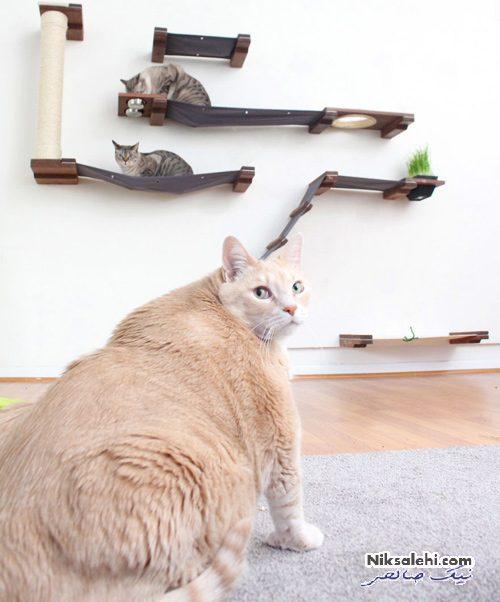 چاق ترین گربه اینستاگرام
