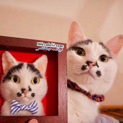 گربه های مصنوعی